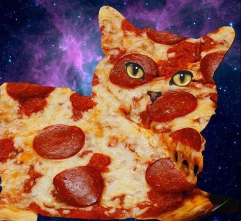 pizza kittens pizza cat in space