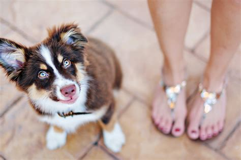 how to puppy proof your house 10 ways to puppy proof your home pretty fluffy
