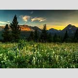 Spring Flower Backgrounds | 1920 x 1440 jpeg 2905kB