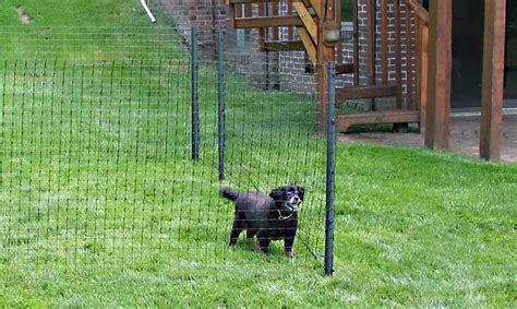 Cool Painting Ideas For Bedrooms small temporary dog fence peiranos fences best