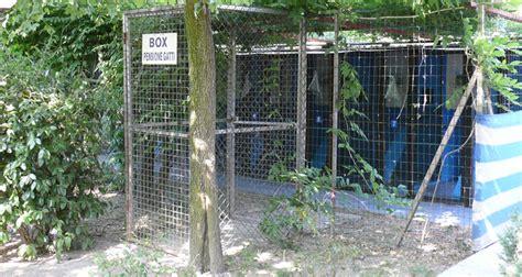 pensione per gatti pavia pensione hotel casa gatto cuccioli grandeluna it