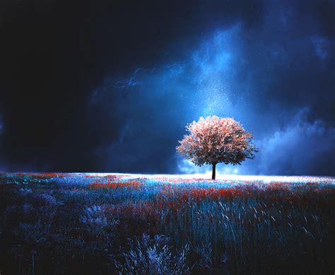 magic tree magic tree by baxiaart on deviantart