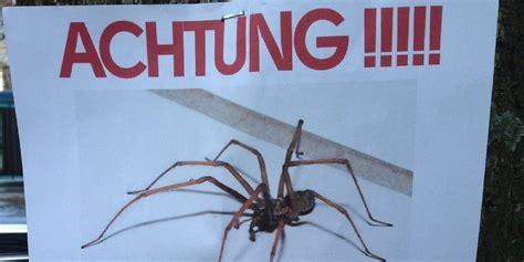 spinnen wohnung wie h 228 lt jegliche arten spinnen dem haus der