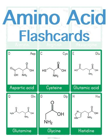 amino acid template cards amino acid flashcards stem sheets