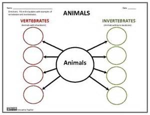 25 best ideas about vertebrates and invertebrates on