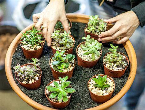 fazer plantas suculentas
