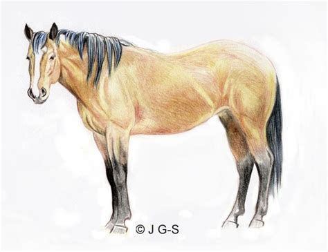 image gallery horse drawings to colour drawing lesson a realistic horse in colored pencil