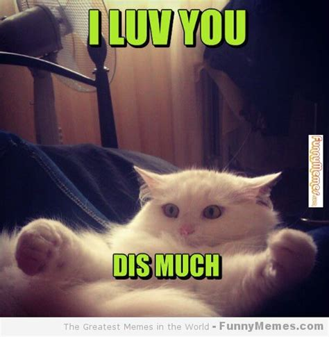 i love cats meme 28 images cat love meme memes i love