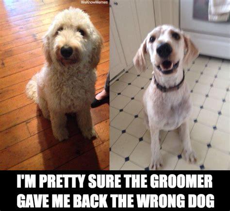 Dog Groomer Meme - grooming memes memes