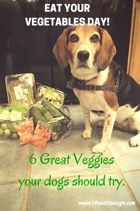 veggies dogs can eat with beagle eat your vegetables 6 veggies your dogs can eat