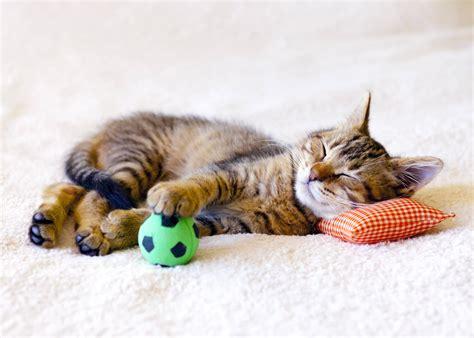 katzengerechte wohnung die wohnung katzengerecht gestalten heimhelden