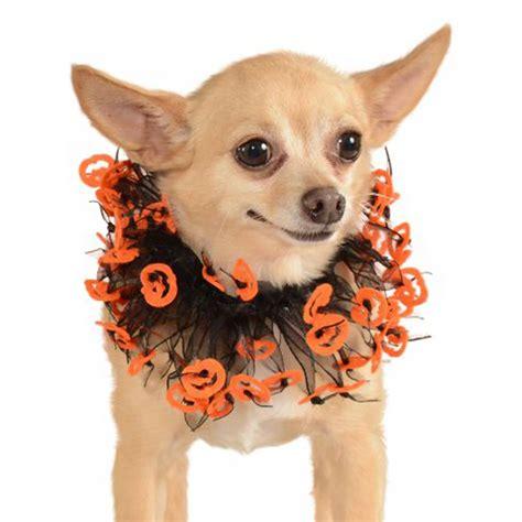 fancy puppy o lantern fancy collar scrunchie baxterboo
