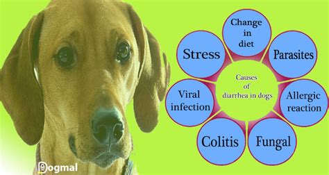 what causes diarrhea in puppies diarrhea causes symptoms treatments