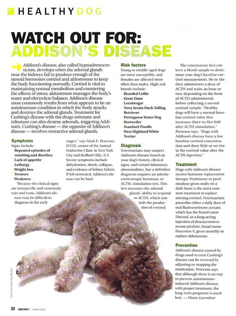 addisons disease in dogs insights into veterinary endocrinology dr peterson quoted in fancy article on