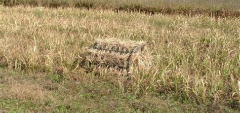 layout blind dove hunting which are the best layout blinds for waterfowl hunting in
