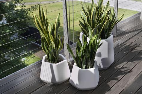 vasi per piante da interni vaso da interno e giardino ops s nicoli