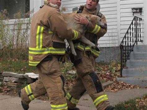 atrapad la vida 8416544298 bomberos salvan la vida de un perro atrapado noticias