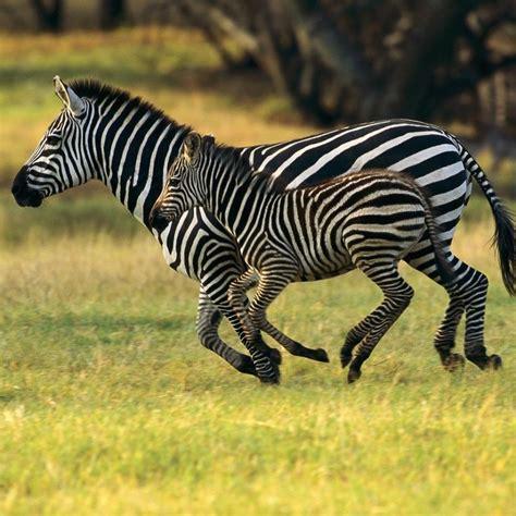 imagenes animales asombrosos animales asombrosos 2 im 225 genes taringa