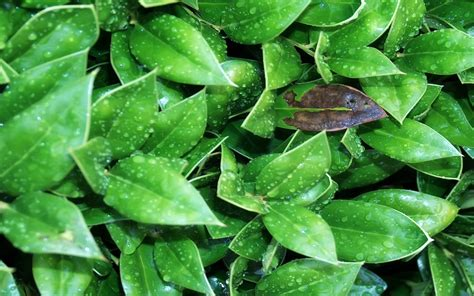 tetes hujan  hijau daun wallpaper tanaman alam alam