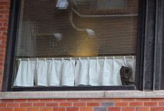 peeping tom curtains 1000 images about pets blinds on pinterest window