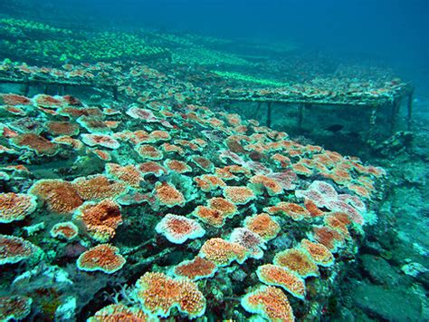 reimagining  coral market   york times
