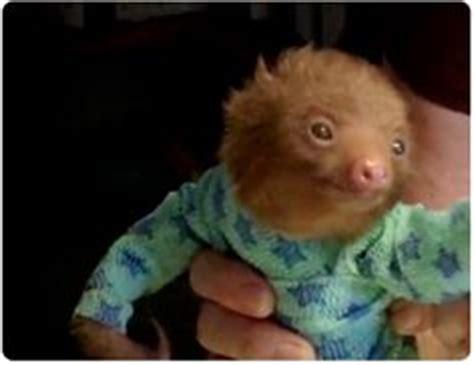 Pjhb85864 Pajamas Hug A Baby images for gt baby sloth in pajamas gif hug a sloth today images for babies