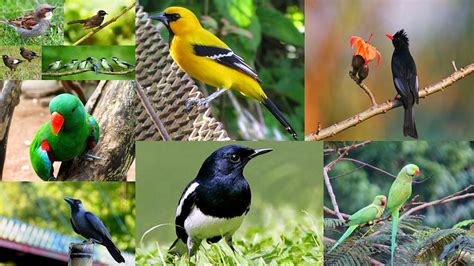 bangladeshi information birds in bangladesh