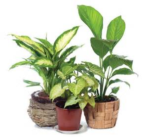 matelic image indoor house plants pictures