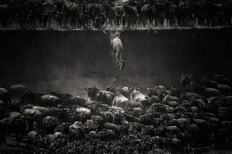 winners of the national geographic photographer contest 2014 national geographic 2014 photo contest hong kong s brian