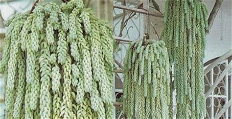 tanaman hias aneka kaktus 7 pcs menanam tanaman panduan praktis cara menjaga tanaman
