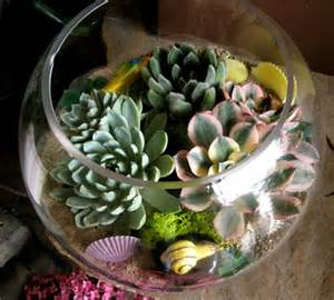 Small Indoor Gardens - 70 indoor and outdoor succulent garden ideas shelterness