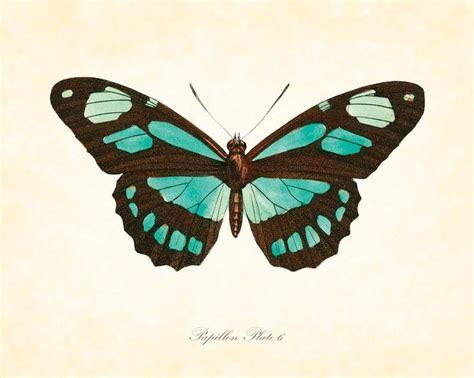 tattoo butterfly vintage 68 best 183 butterflies images on pinterest