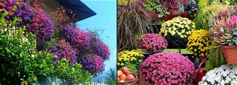 balconi invernali fioriti balconi fioriti scopri l esposizione giusta mondo