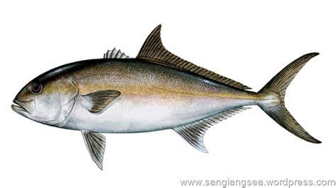 gambar macam macam ikan laut indonesia bagian 01 sangiang sea