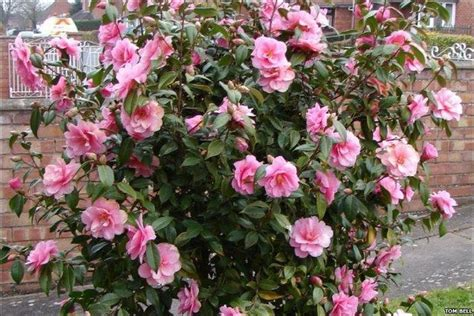 bbc first spring flowers herefordshire and worcestershire