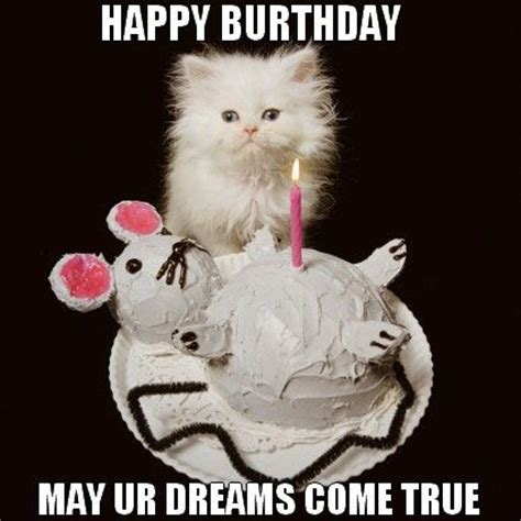 17 best images about birthday cats on pinterest   funny