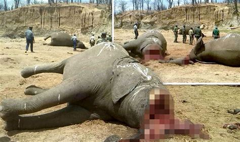 Elephants BEHEADED in Cecil the lion Zimbabwe park in ...