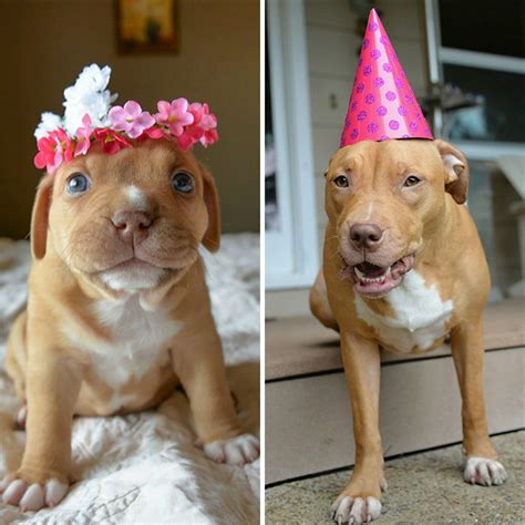puppy birthday abandoned pup celebrates the 1st birthday no one thought