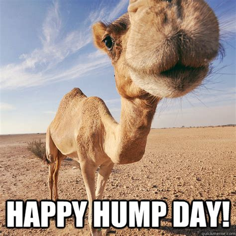 Funny Hump Day Memes - funny happy hump day camel quotes