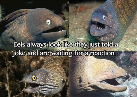 Bad Joke Eel Meme - ladies and gentlemen let me introduce you to the bad joke