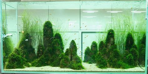 aquarium design japan japanese aquascaping interior design ideas
