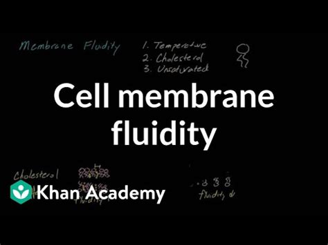cell membrane fluidity video cells khan academy