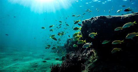 maui snorkeling spots  places   underwater journey