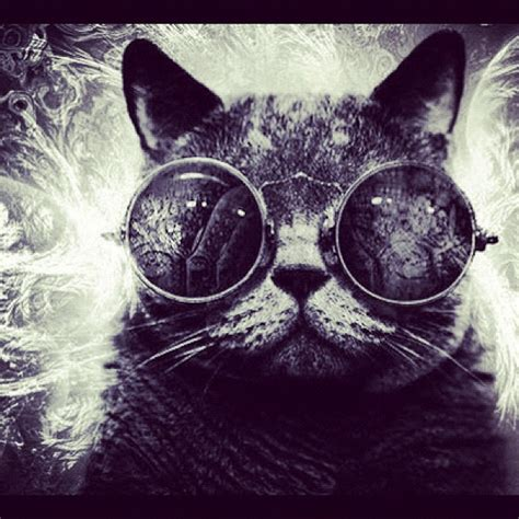 Cat With Glasses Black chiop cat cool glasses black pet cats