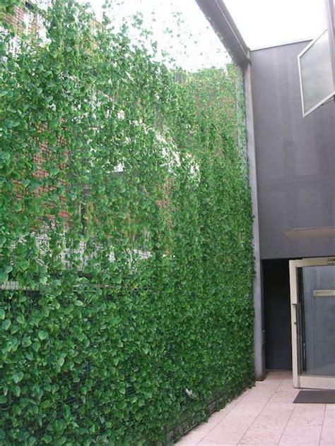 Balcony Screening Plants by 25 Best Ideas About Balcony Privacy Screen On Pinterest