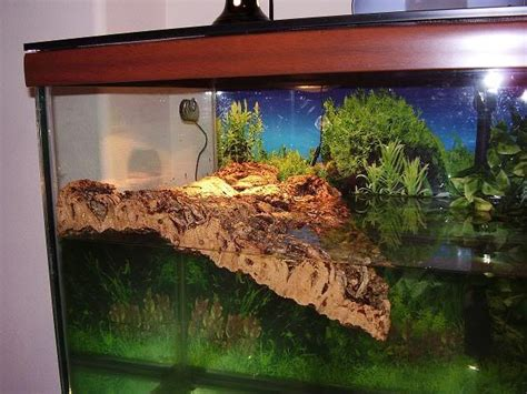 aquarium design for turtles cork board for basking area fish tank ideas pinterest