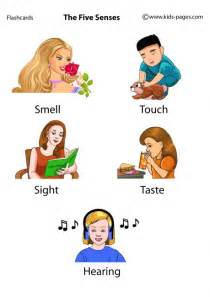 the five senses flashcard