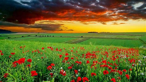 full hd nature wallpapers p desktop  green landscape