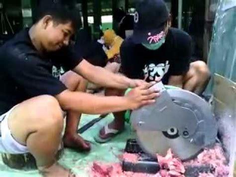 Gergaji Tulang Sapi memotong tulang sapi qurban menggunakan mesin gergaji