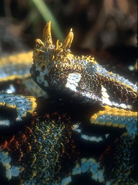 film ular derik ular berbisa paling mematikan dunia 1000 fakta unik dan